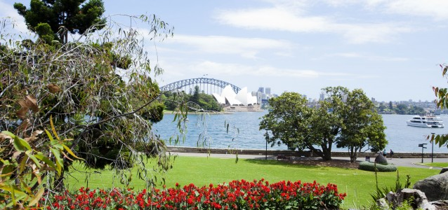 Opera House and Kangaroo paws, canalillies