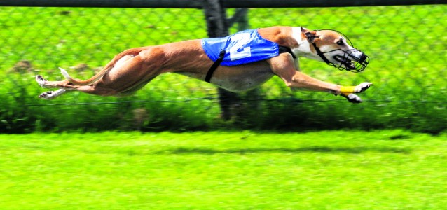 In 2012-13 over $1 billion was wagered on greyhound racing in New South Wales. Source: Wikicommons